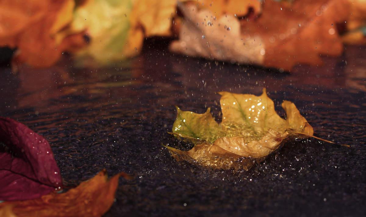 hoja de otoño en charco